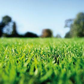 green_grass2